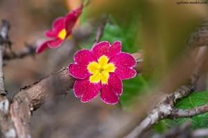 kwiaty w ogrodzie 02