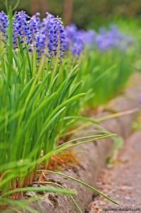 kwiaty w ogrodzie 04